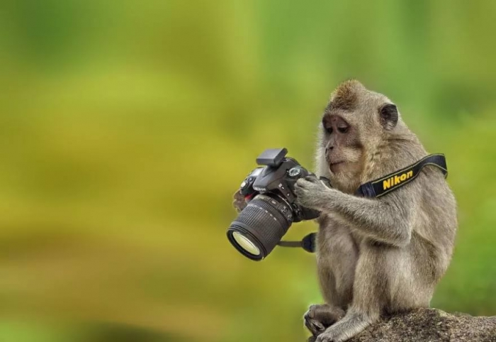 Ну давай,снимай, фотограф:) (38 фото)