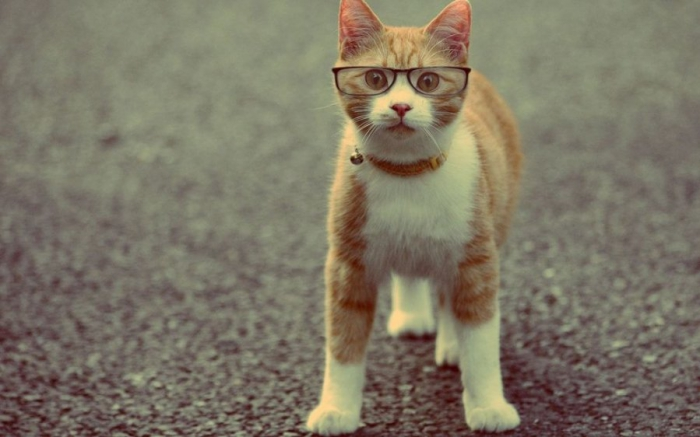 Юмор: Подборка умных котов