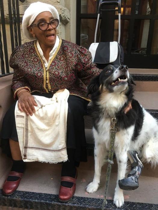 Знакомьтесь с чудо-собакой! (11 фото)
