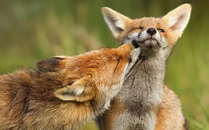 Нежные кадры из мира животных (35 фото)