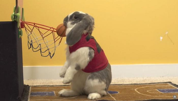 Знаменитый баскетболист:)