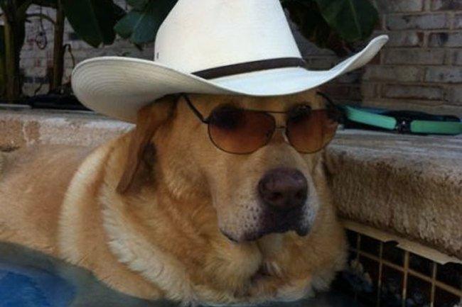 Красивая жизнь в шляпках (45 фото)