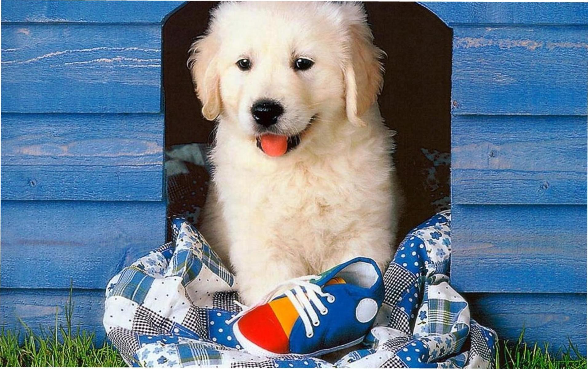 этого картинка собака и дом насыщенного цвета диапазоне