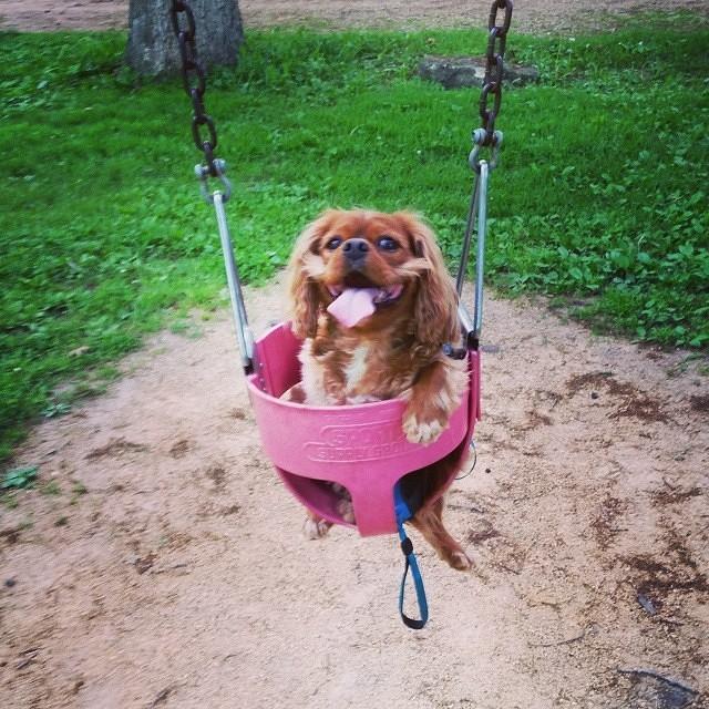 уже картинки собака на качелях удобны при