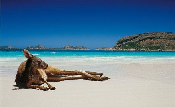 Зверушки на пляже (45 фото)