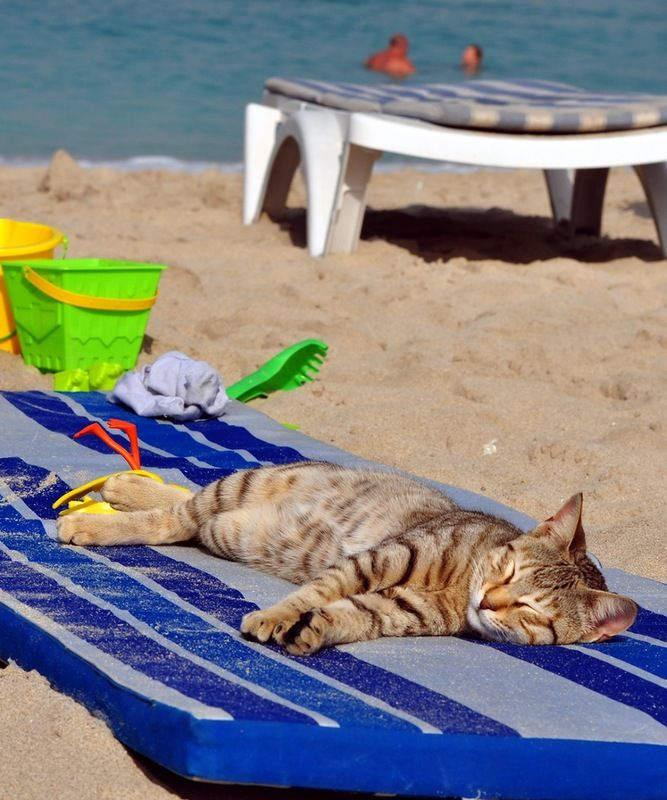 Картинки с юмором на пляже