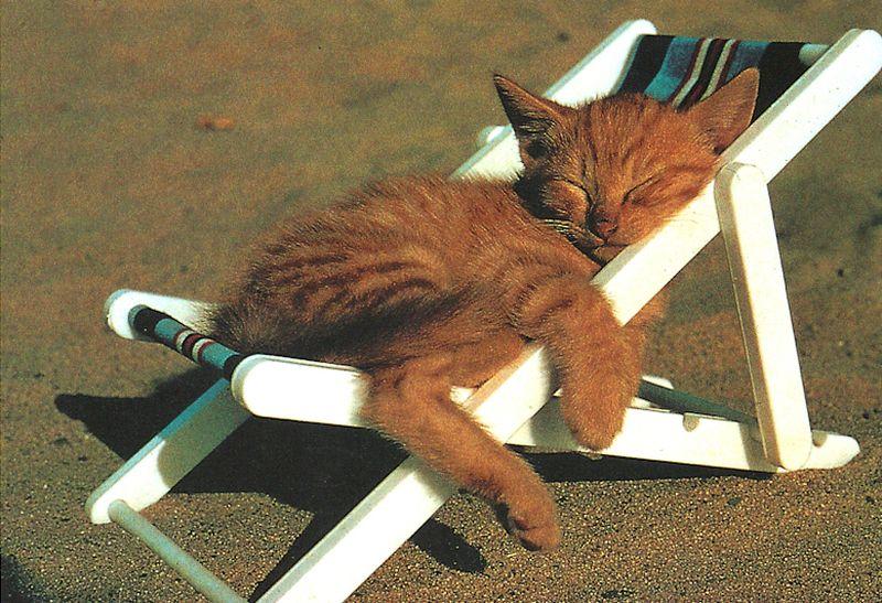 картинки с котами про отпуск является важнейшим промышленно-транспортным