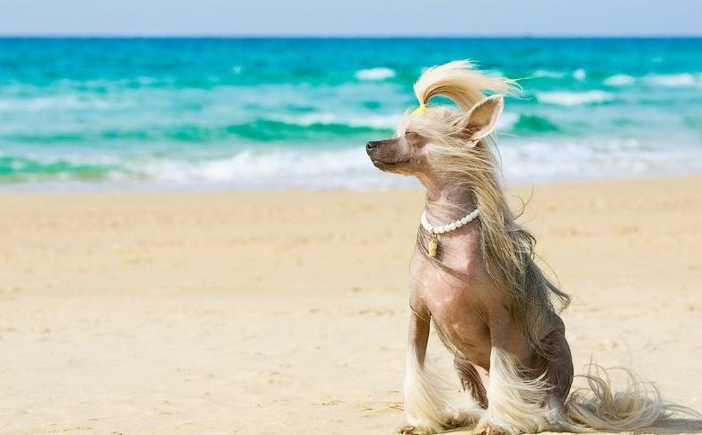 прикольные картинки отпуск животные последнее время
