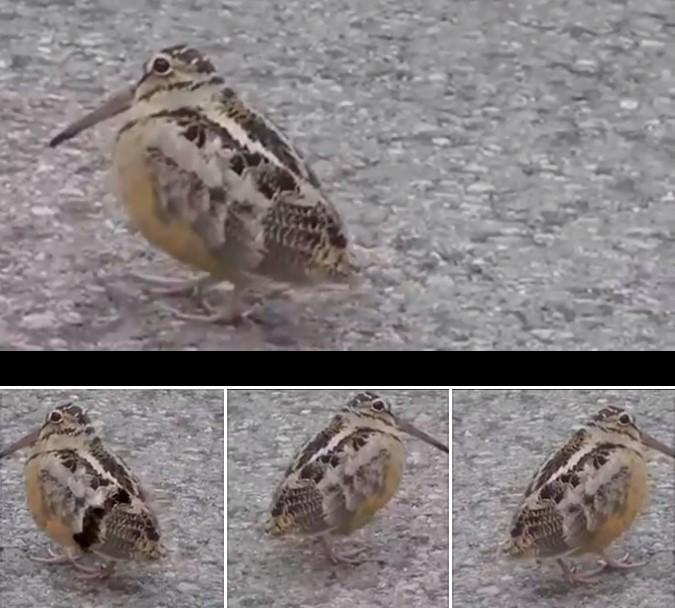 Юмор: Интересный танец птички