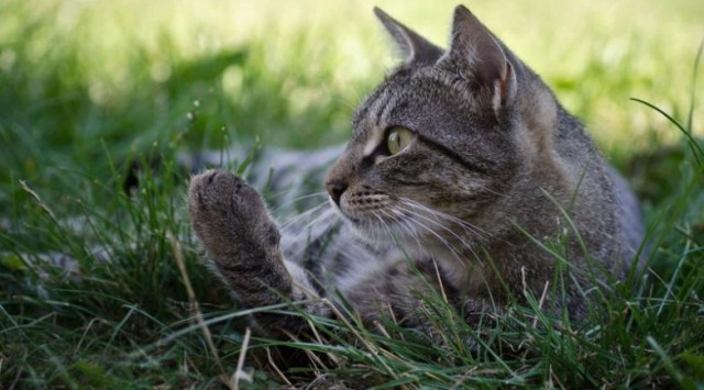 История одного кота (11 фото)