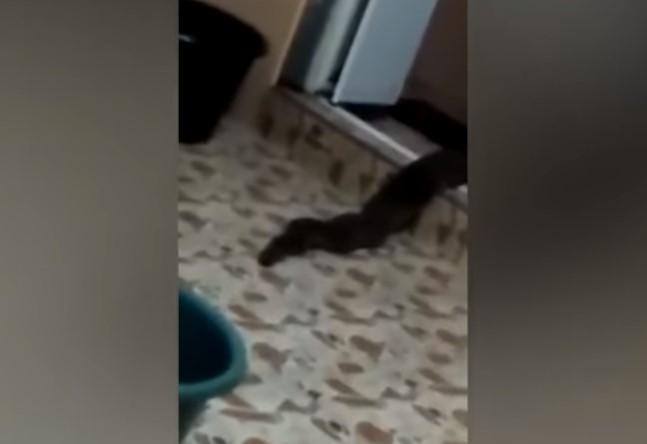 Житель Малайзии снял на видео неизвестное существо
