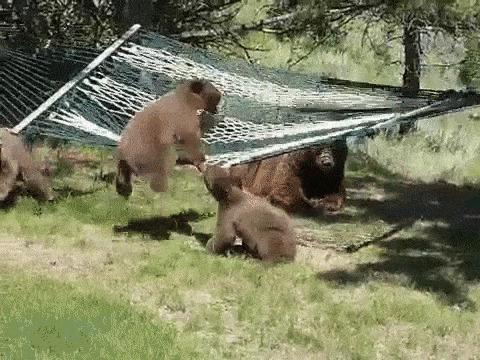 Юмор: Развлечение для медвежат