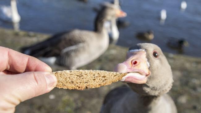 Это нужно знать: Осенью кормить перелётных птиц нельзя!