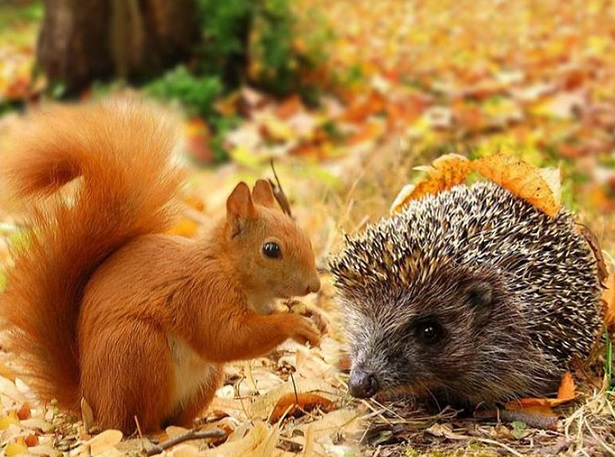 Осенние фото животных (40 фото)
