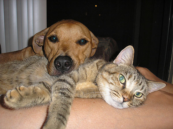 Дружба навек! (25 фото)