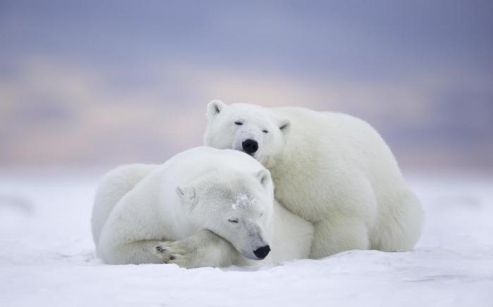 Милые животные (35 фото)