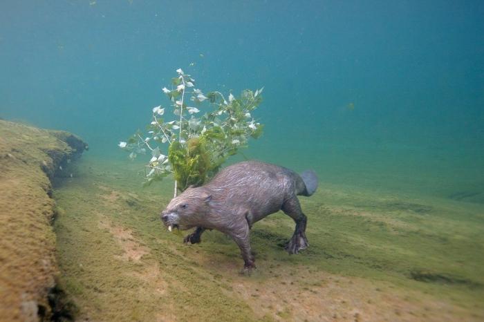 4 года под водой ради одного снимка (2 фото)