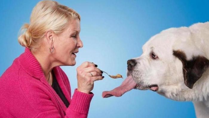 Собака с самым длинным языком в мире