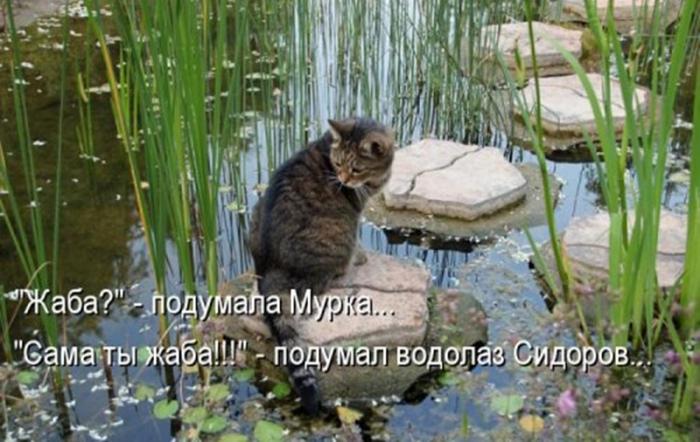 Котоматричные картинки (30 фото)