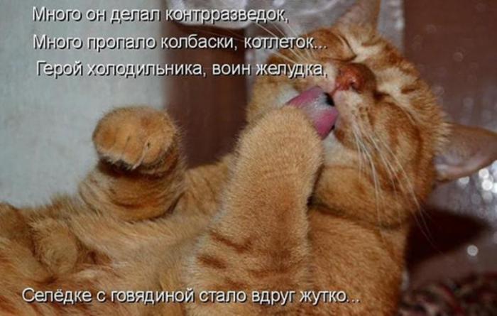 Котоматрица для настроения! (30 фото)