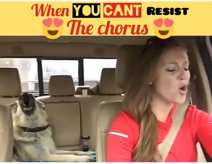 Юмор: Видео: Собаке медведь на ухо наступил, но как поёт! ...Weeeeeeeee are the champions, my friends...