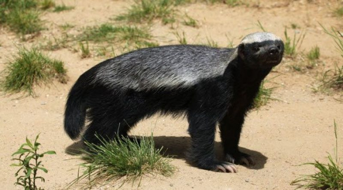 Десятка смертельно опасных животных, несмотря на то, что их внешний вид говорит об обратном (10 фото)