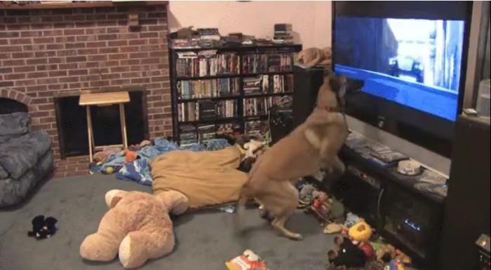 Юмор: Эмоциональный пёс смотрит мультфильм