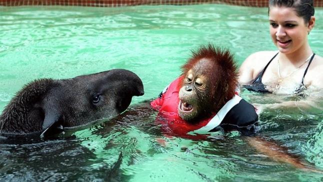 Животные, которые любят поплескаться в водичке (36 фото)