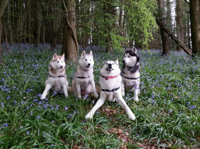 Юмор : 14 крутых фотоснимков животных, которые подняли всем настроение!