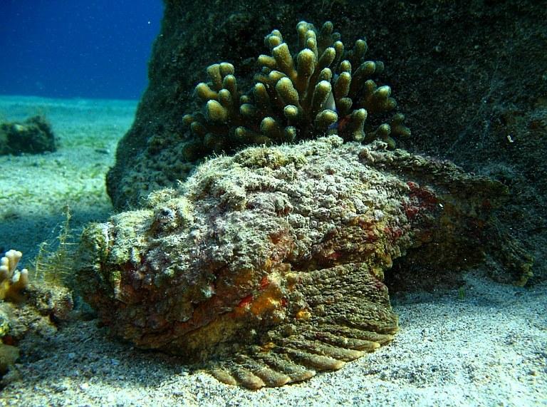 сайте рыба камень картинки фотосессия очень необычна