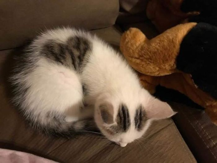 Необыкновенные окрасы кошек и котов (25 фото)