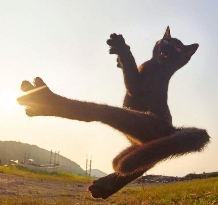 Забавные животные (35 фото)