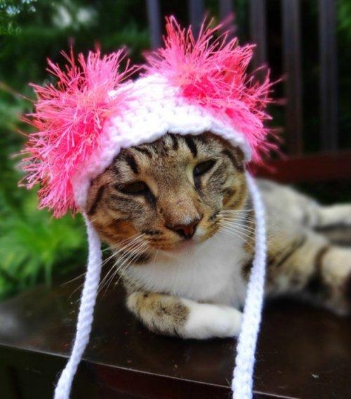 Вязаные шапочки для кошек (15 фото)
