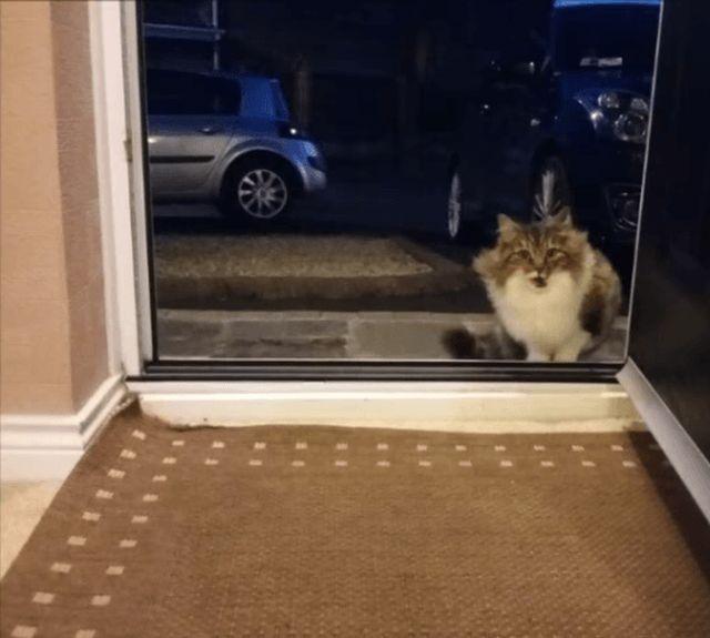 Счастье вдруг в тишине постучалось в двери:) (8 фото)