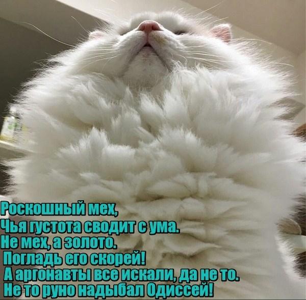 ЛОЛ котэ (25 фото)