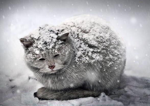 Опасности холода для кошек
