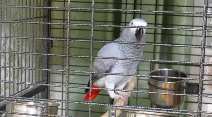 Юмор: Попугай читает стихи