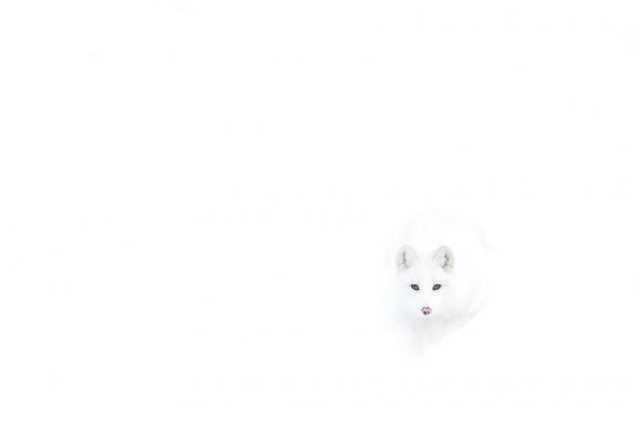 Фотоподборка очаровательных лис (30 фото)