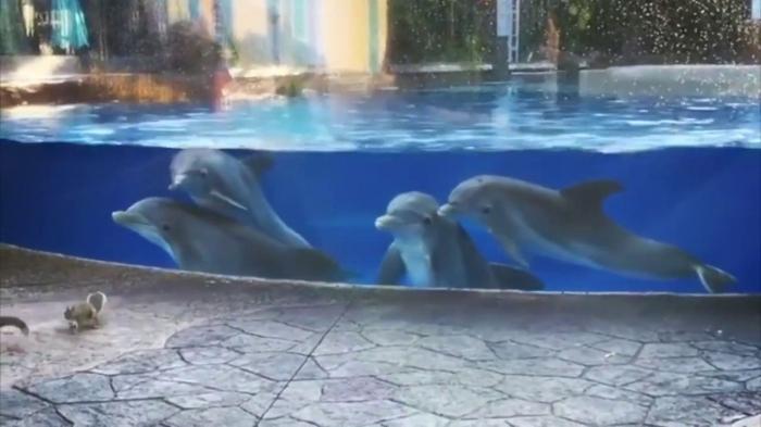 Забавная реакция любопытных дельфинов на белок