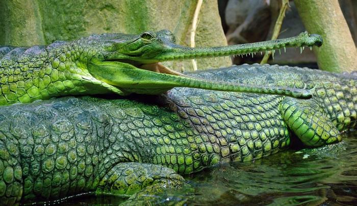 Это интересно: Причудливый крокодил (25 фото)