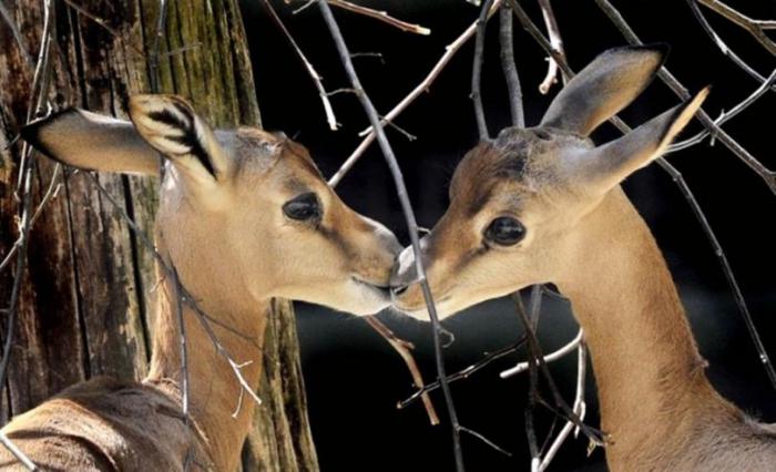 Позвольте Вас поцеловать:) (25 фото)