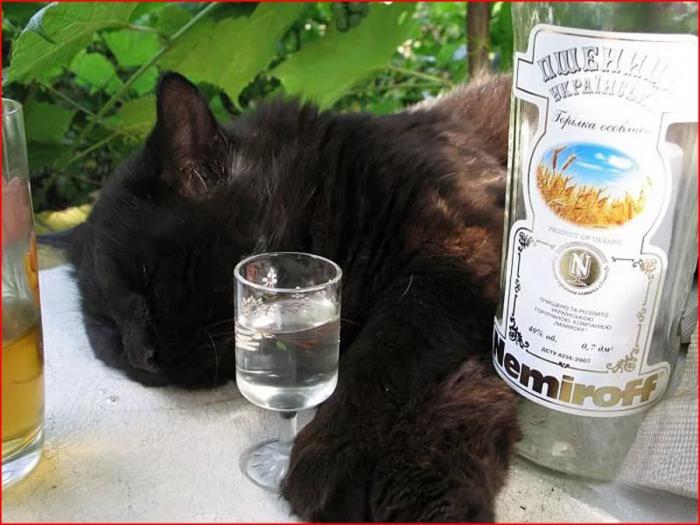 Животные-выпивухи:) (35 фото)