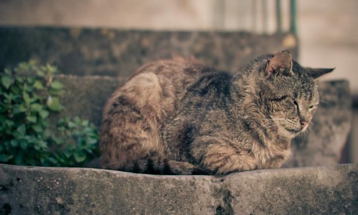 Бездомные животные (30 фото)