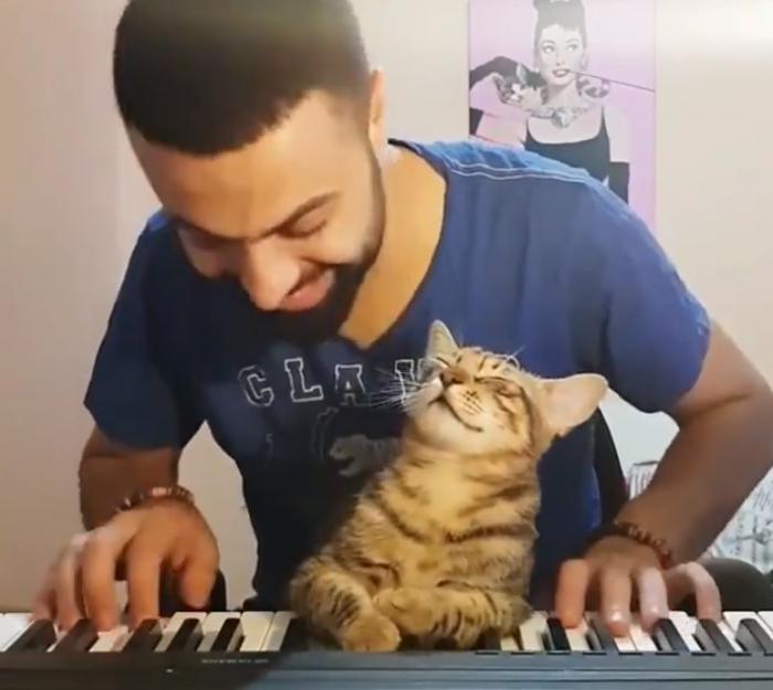 Юмор: Кот меломан