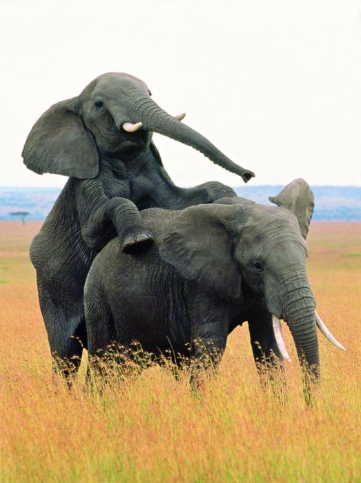 Любовь среди животных (6 фото)