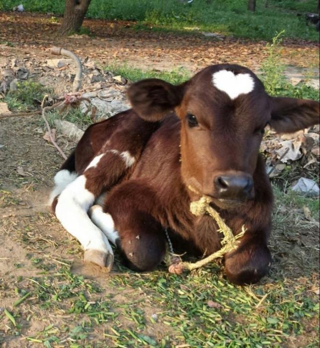 Юмор: 20 животных, раскрашивая которых природа была в ударе