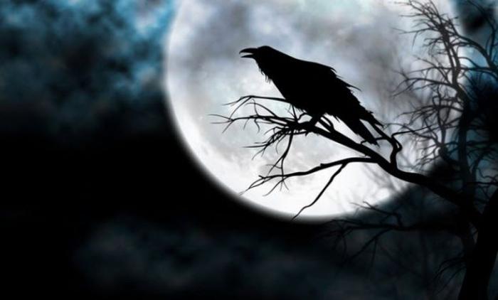 Это интересно: 10 фактов о воронах
