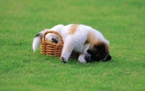 Спящие щеночки (20 фото)