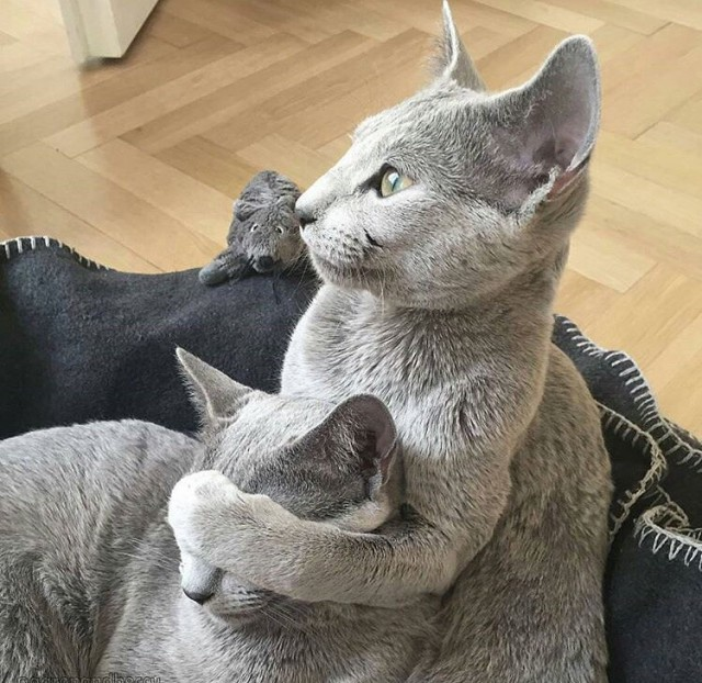 Ох уж эти кошки! (45 фото)