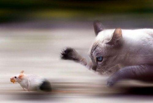 Прикольные стоп-кадры из мира животных  (20 фото)